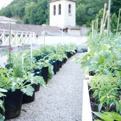 Cultivons nos toits Grenoble