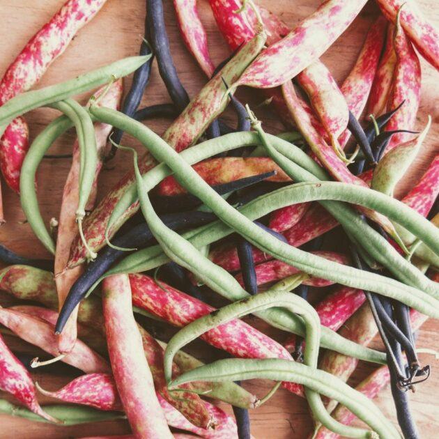 haricots dans le panier de fruits et légumes grenoblois