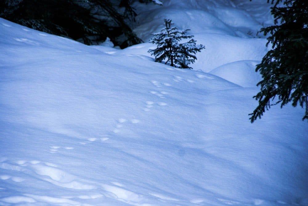 Balade hiver Grenoble