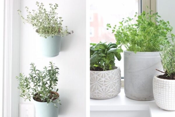 jardiner en appartement