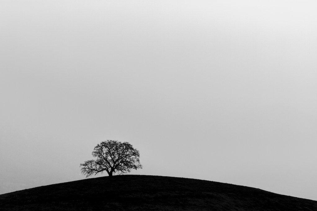 Le magnifique chêne de Venon
