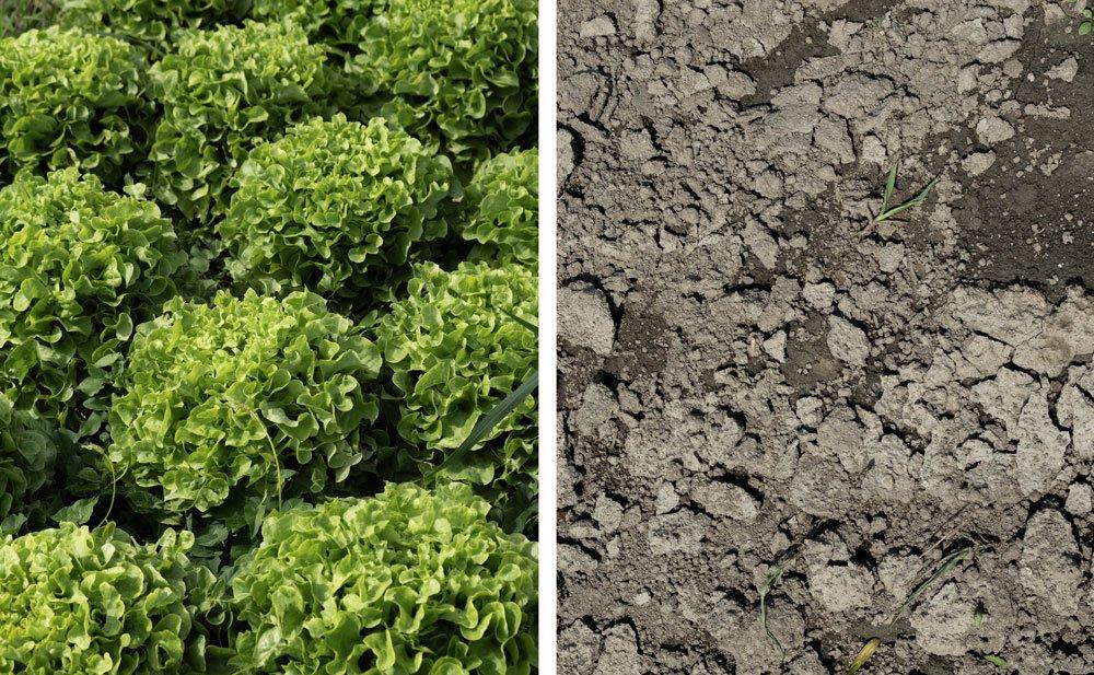 agriculture paysanne et bio