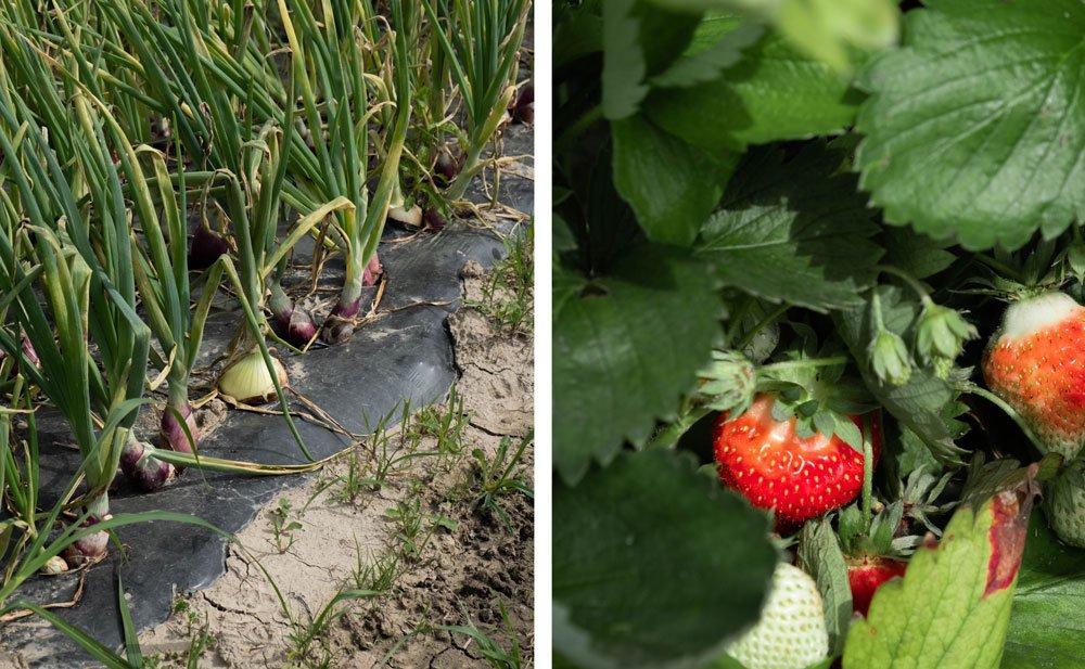 agriculture paysanne biologique